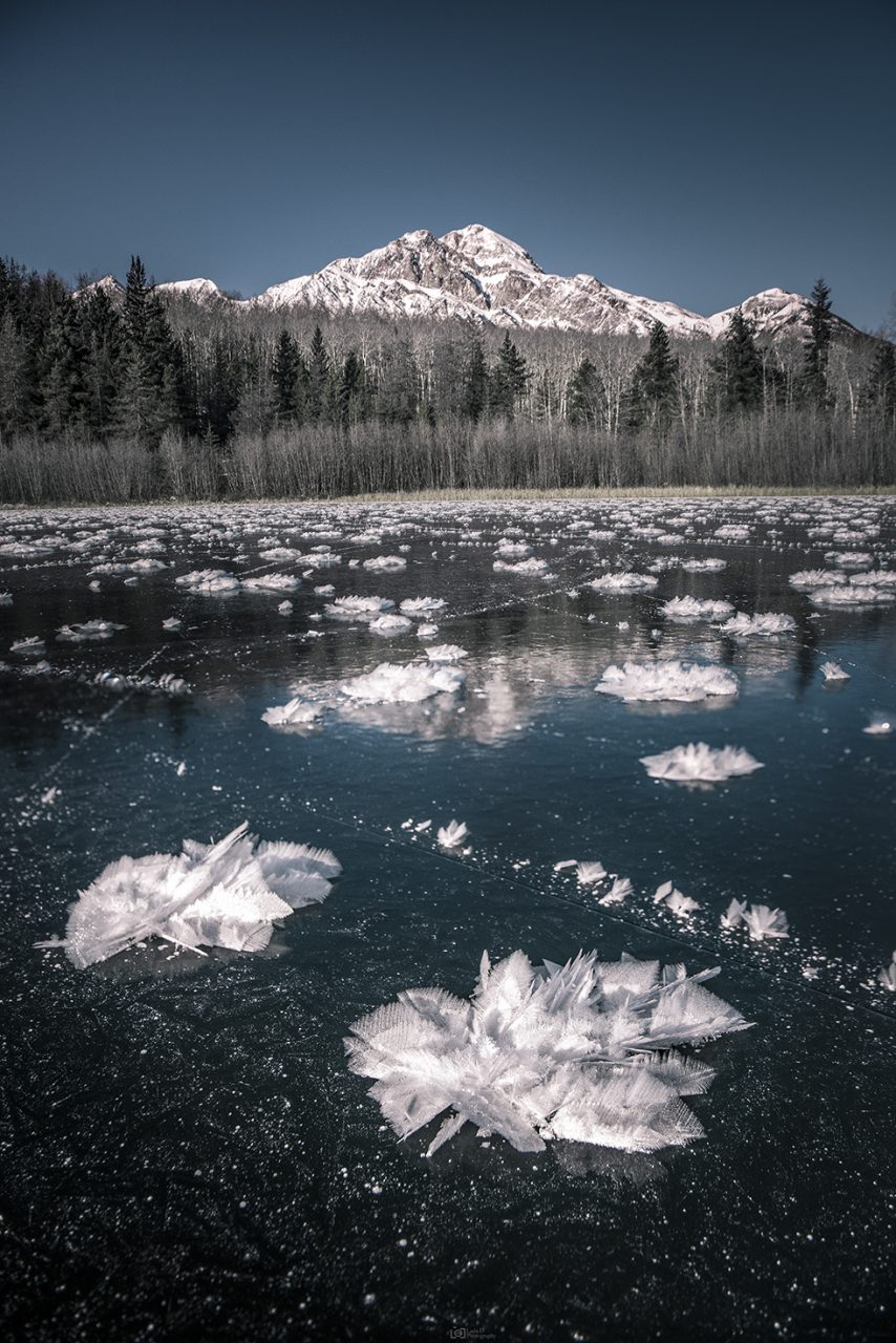 Frost Flowers on Patricia Lake - Jasper National Park